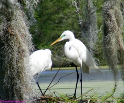 Spring love at the Audubon Swamp