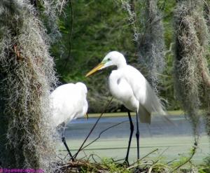 Spring love at the Audubon Swamp