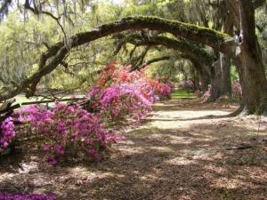 Walk and bike path under old oak trees