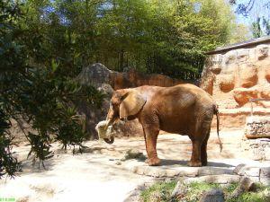 Famous Elephant Painter
