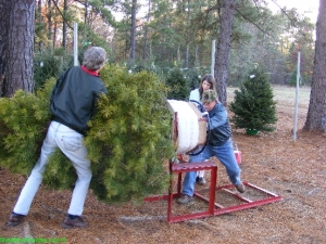 Bagging the Christmas tree
