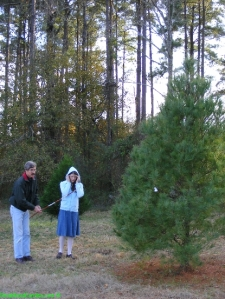 Choosing the perfect Virginia Pine