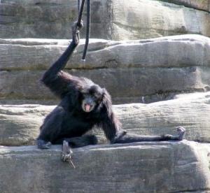 Holler monkey Riverbanks Zoo