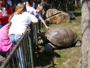 Pet a Giant Turtle!
