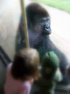 Kids admiring a silverback gorilla