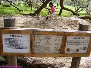 Fossil Dig Fun
