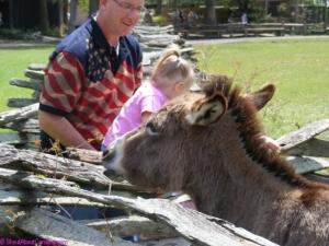 Cute little donkey!