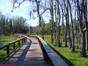 Boardwalk over the eerie swamp