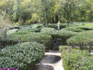 Find your way through the Garden Maze