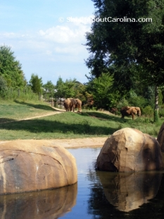 Gorgeous Elephant Habitat at NC Zoo