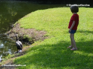 Hi there Anhinga bird!