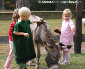 Children enjoy taking care of a cute donkey