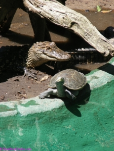 Incredible reptiles on Edisto Island near Charleston