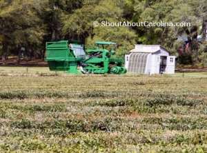 State of the art machinery on display at Charleston Tea Plantation
