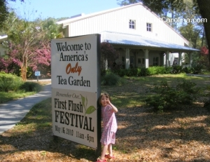 Come to the First Flush Festival at Charleston Tea Plantation