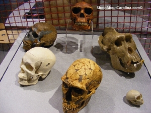 Skeletons of our ancestors