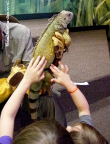 Touch the iguana Charlotte World Alive exhibit