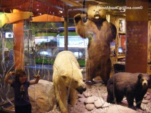Life size replicas grizzly polar black bears