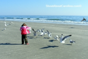 Playing with birds Cherry Grove Beach