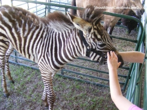 Exotic animals show Columbia Spring Fair