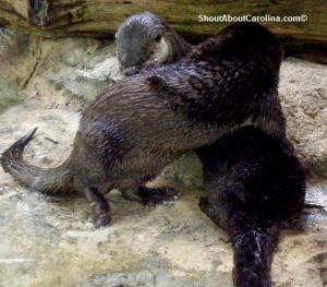 Funny aquatic mammals Brookgreen Gardens