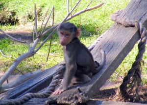 Riverbanks zoo most adorable animal babies