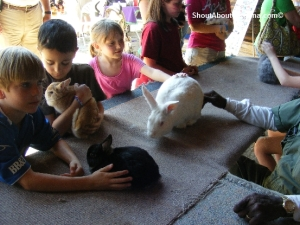 Farm animals petting zoo fun