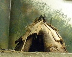 Waccamaw Indians semi-nomadic shelter