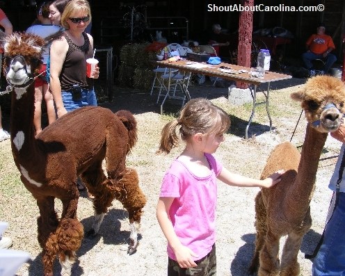 Soft Alpaca Wool Sparkleberry Fair Petting Zoo