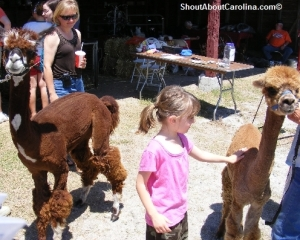 Exotic farm animals at thespring fair