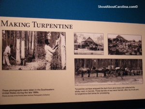 The turpentine making process in late 19th century