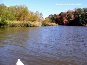 Beautiful foliage, scenery and wildlife viewing at Lake Wateree