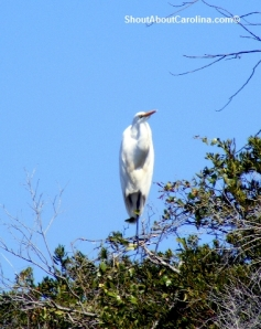 Wading bird up in the tree