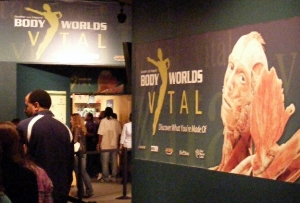 People lining up to enter the Body Worlds exhibition