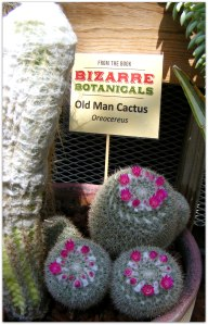 Bizarre Cacti McMillan Greenhouse at UNC Charlotte