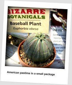 American pastime comes in a cactus!