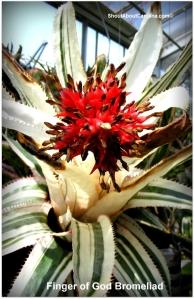 A magnificent bromeliad plant