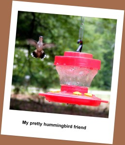 Feisty hummingbird