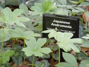 A nice cultivar from Japan